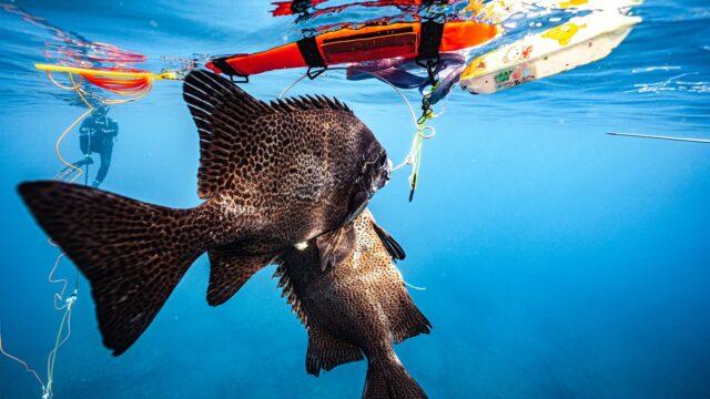 魚突き 素潜り