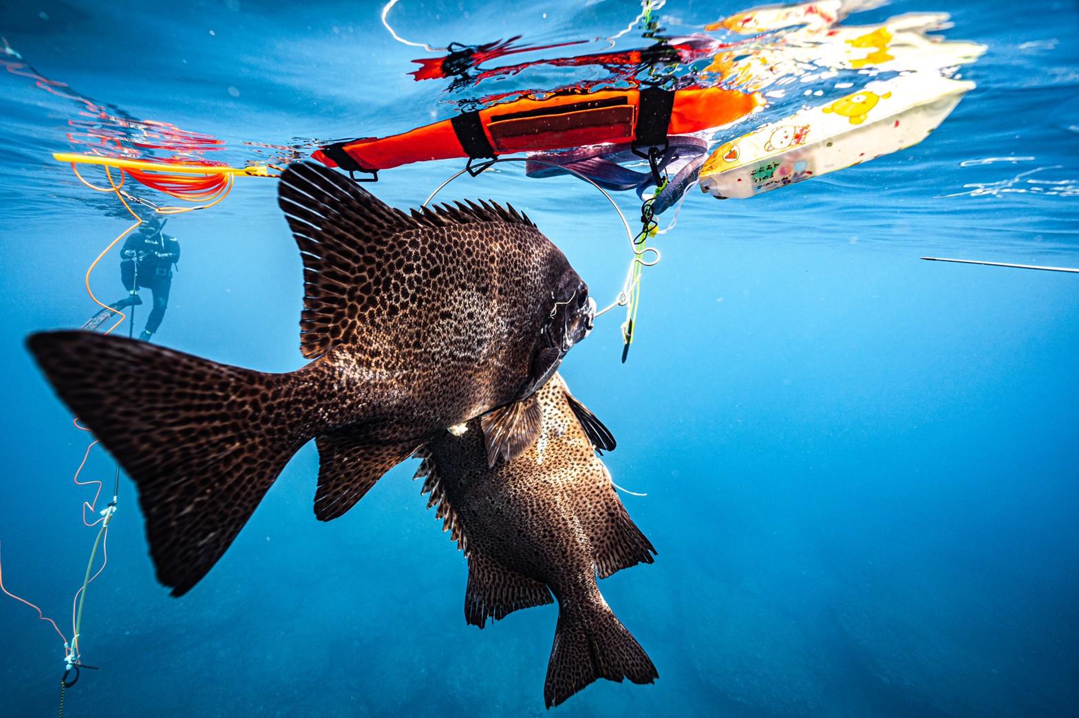 魚突き 安全対策