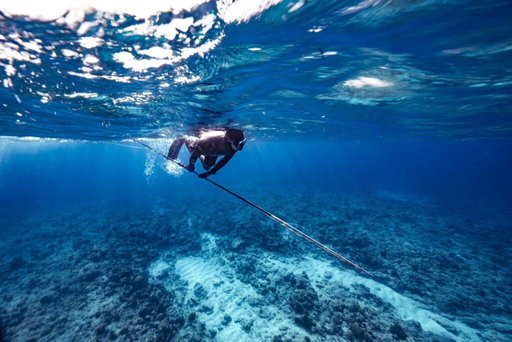 イソマグロ 魚突き